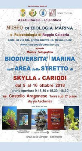 """REGGIO – La mostra fotografica """"La Biodiversità marina"""""""