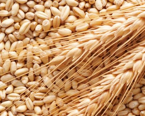 Coltivazione dei cereali
