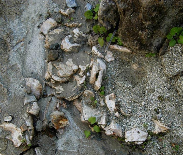 Fossili di Cessaniti
