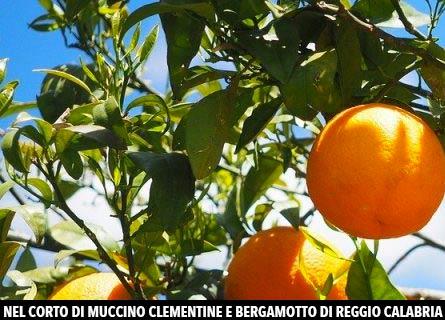 Le clementina nello spot di Muccino