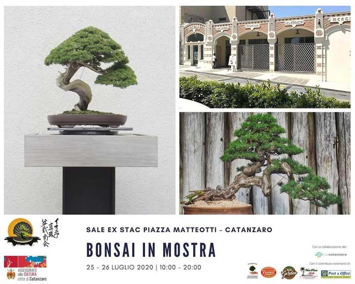 bonsai in mostra