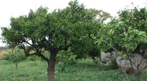 Agricoltura in Calabria