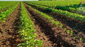 fondi agricoltura