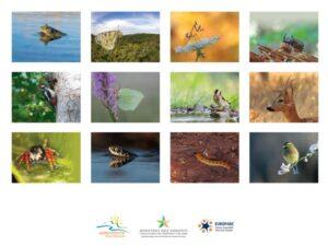 Calendario Parco Nazionale d'Aspromonte