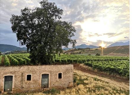 Paesaggio rurale calabresei