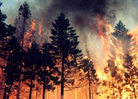 Incendi boschivi in Calabria