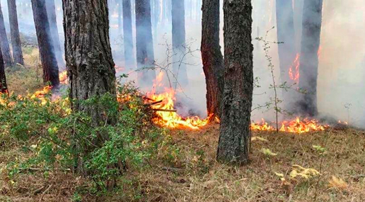 Incendi boschivi in Aspromonte