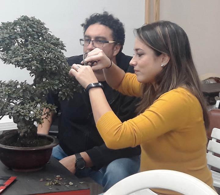 mostra bonsai a Catanzaro